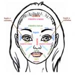 mappa faccia organi