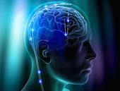 neuroscienze_cervello