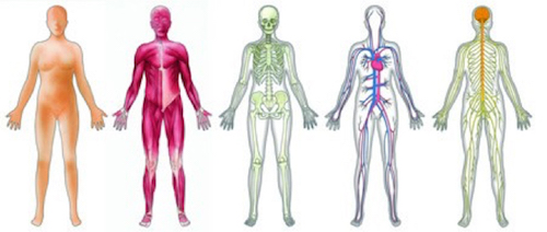 Fisiologia-sistemi