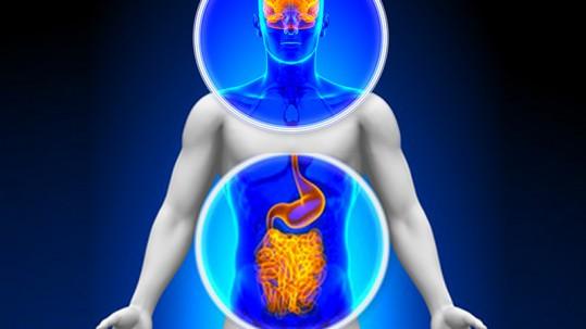 intestino cervello batteri probiotici