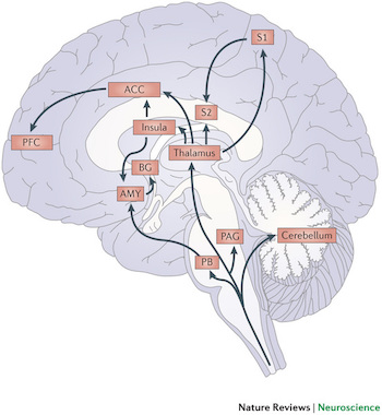 insula interoception