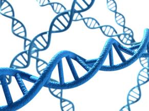 genetica, epigenetica