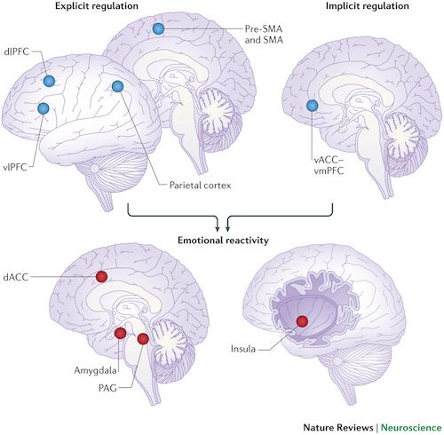 aree cervello emozioni tecniche