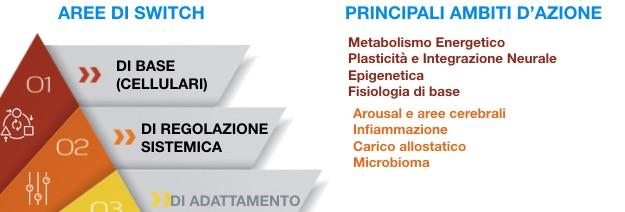 infiammazione metabolismo ansia