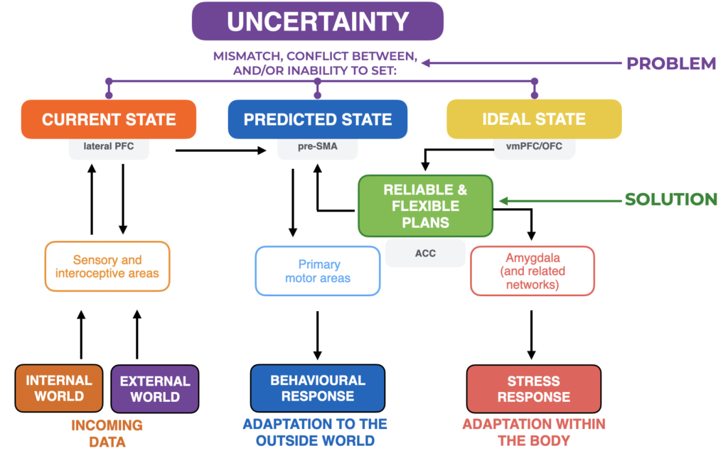 uncertainty brain networks